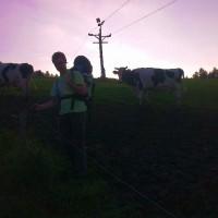 Krávy nám zablokovaly cestu. Neútočily.