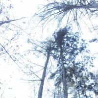 Vertikální panorama