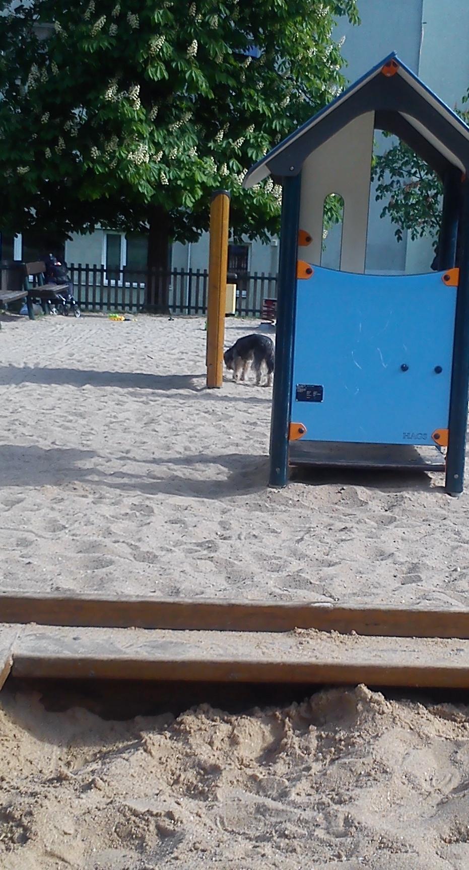 Pejsek pouze očuchává tabuli na dětském hřišti
