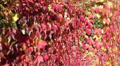 Je tu podzim a blíží se zima - jak zabavit děti?