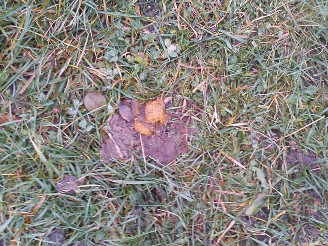 Psí výkal použitý k hnojení loučky