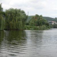 Vrby a voda