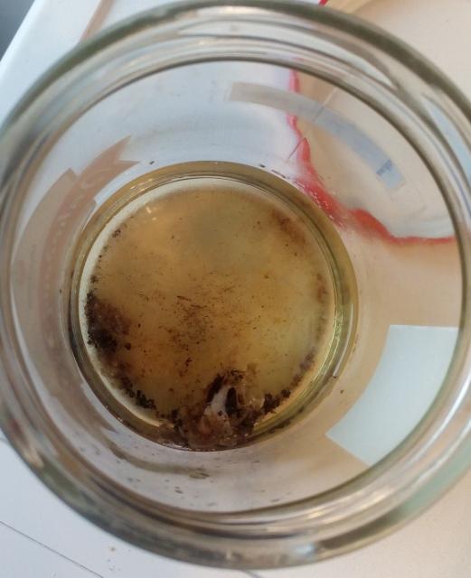Z ulity v kyselině téměř nic nezbylo...