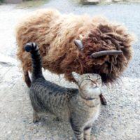Kozel a kočka v Šestajovicích