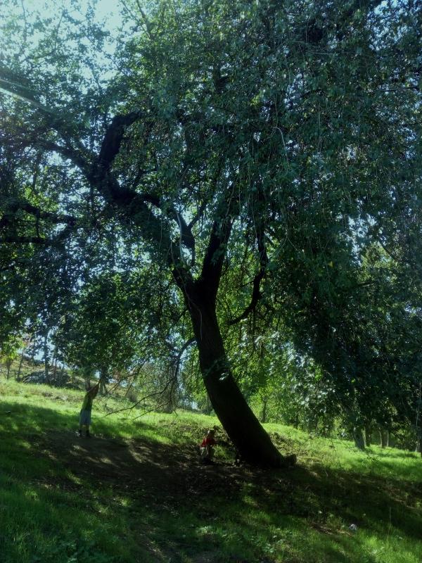 Na tomhle stromě je přivázáno lano...