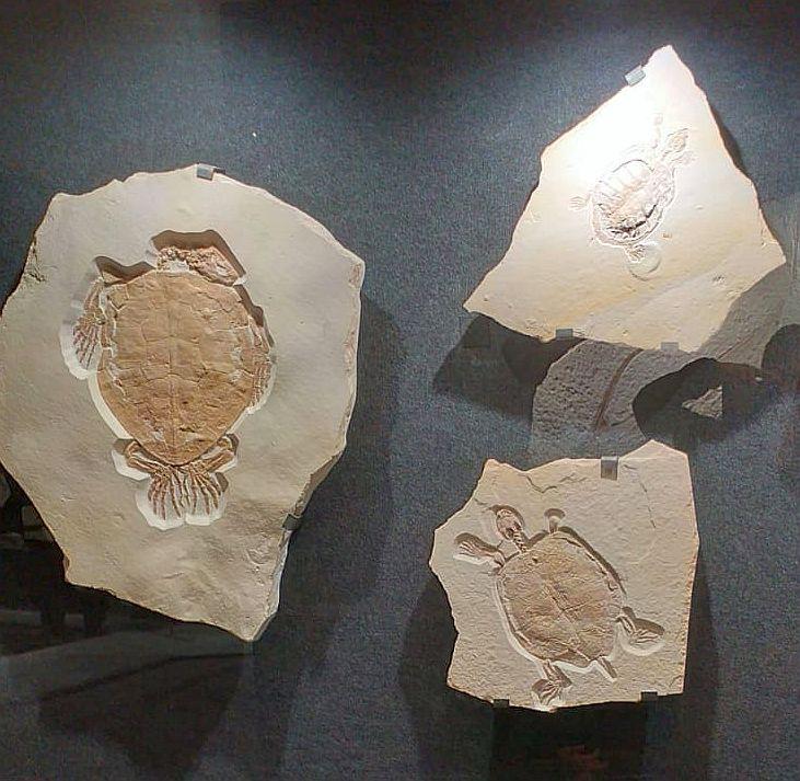 Zkameněliny v dinoparku Altmühltal