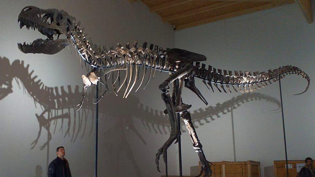 Kostra tyranosauřího mláděte v dinoparku Altmühltal