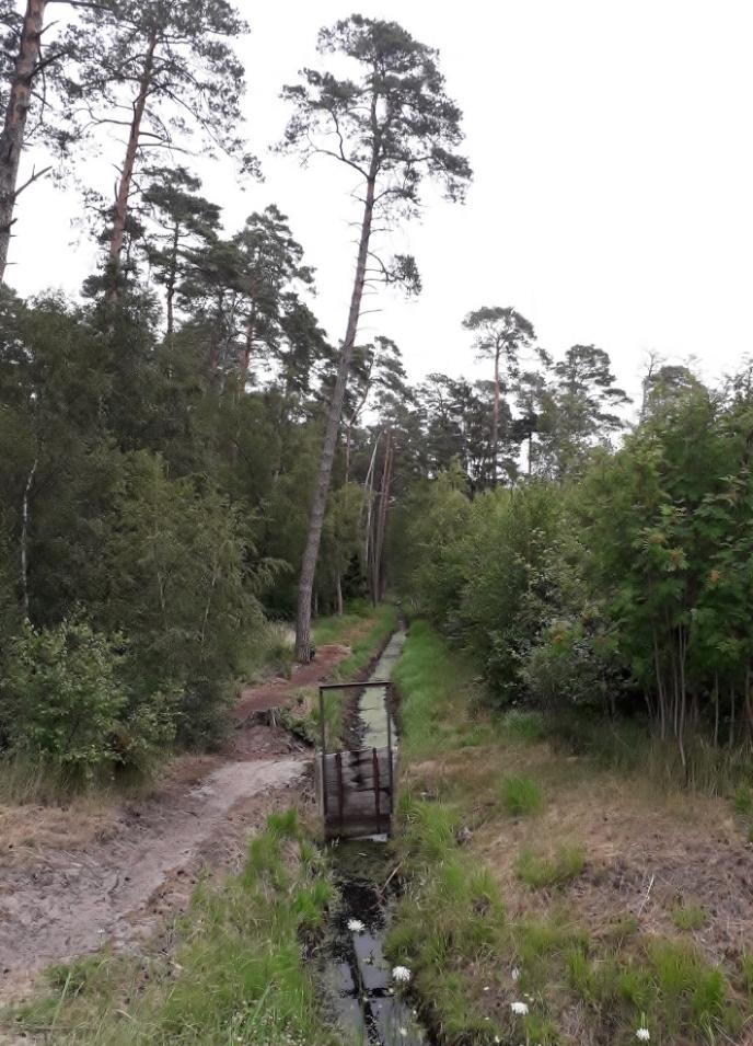 Cesta lesem - Międzyzdroje