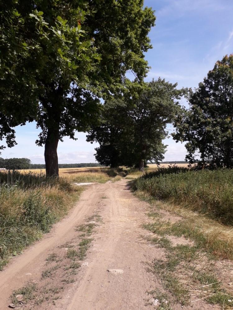 Polní cesta Wrzosowo - Dziwnówek